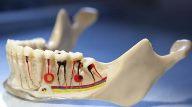 особенности строения зубов человека
