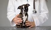 лечение болезней пародонта у собак