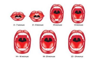 cхема прорезания зубов у детей: