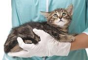 лечится пародонтоз у кошек и собак