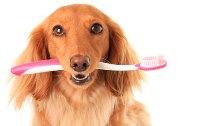 лечение пародонтита у собак
