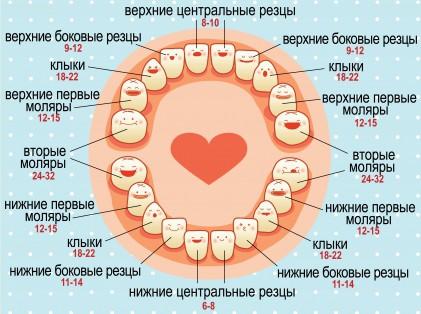 в каком возрасте появляются зубы