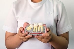 какие зубы 8