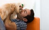 неприятный запах из пасти пса