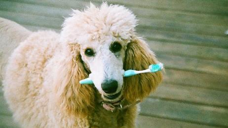 нужно ли чистить зубы псу