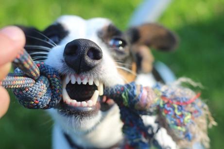 аномалии прикуса у собак
